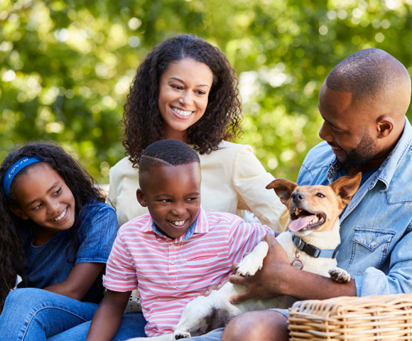 Produtos para animais de estimação - Confira os melhores | Blog Copafer